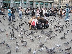 duiven op de dam