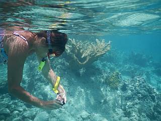 fotograferen snorkelen